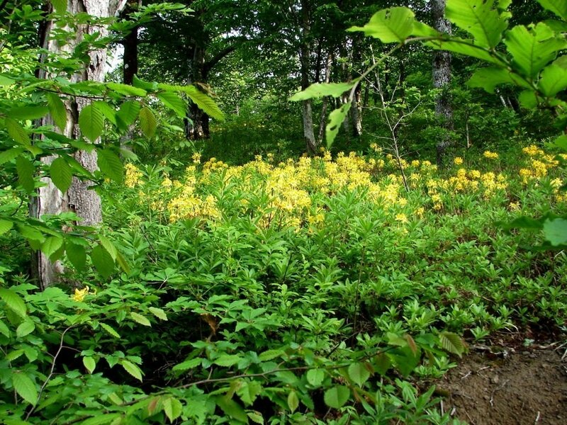 В лесу, у цветов