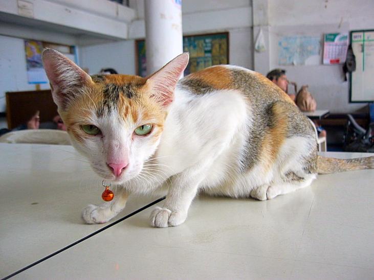 Кошки при должности Станционный смотритель