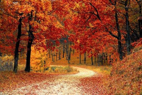Первая неделя ноября начинается со снега, а завершится жарой