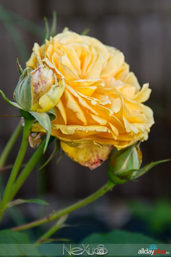 Я люблю все цветы, выпуск 221.