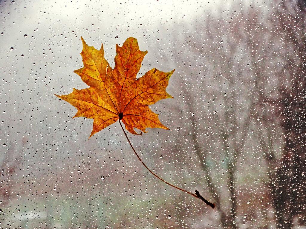 Я видела осень… Она целовалась с дождём…
