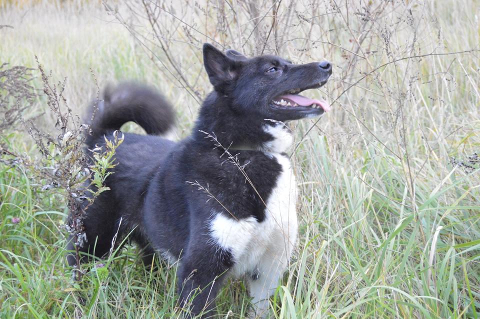 Флай собака из приюта догпорт