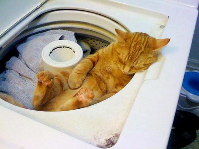 © imgur  Большая стирка отменяется, теперь это моя кровать.