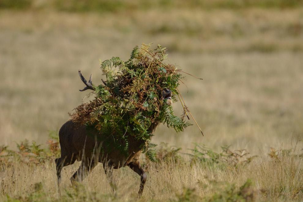 12. Смущенный сурикат. (Фото Brigitta Moser | Comedy Wildlife Photography Awards):