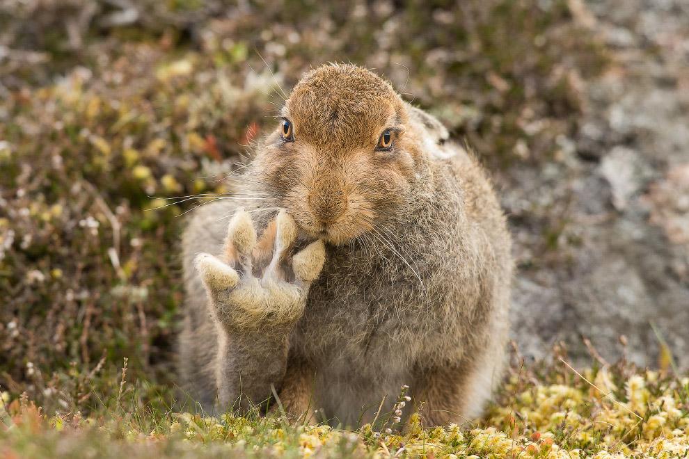 25. Не тыкай копытом. (Фото Patricia Bauchman | Comedy Wildlife Photography Awards 2016):