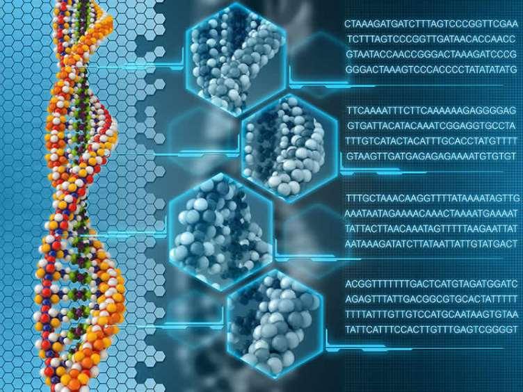 рис 12 – база геномов ДНК.jpg