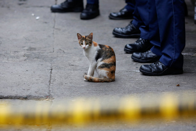 A cat sits behind a police line during investigating after two men were killed during a drugs relate