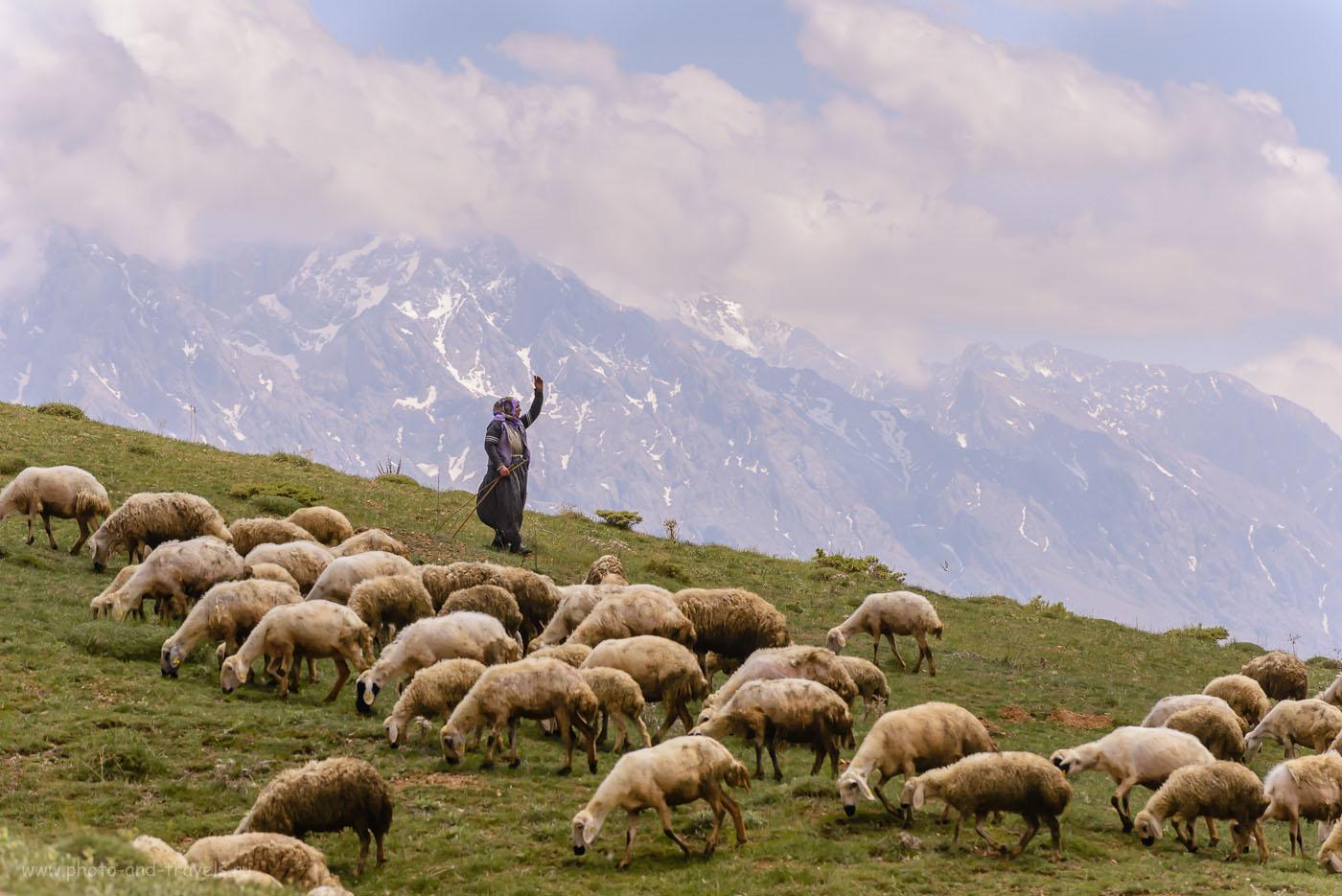 Фото 4. Пастушка в горах Аладаглар. Отзывы туристов об отдыхе в Турции. 1/2000, -0.67, 8.0, 400, 195.
