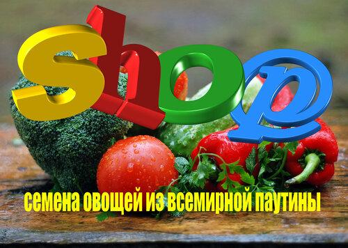 Семена томатов от сортоиспытателей России.