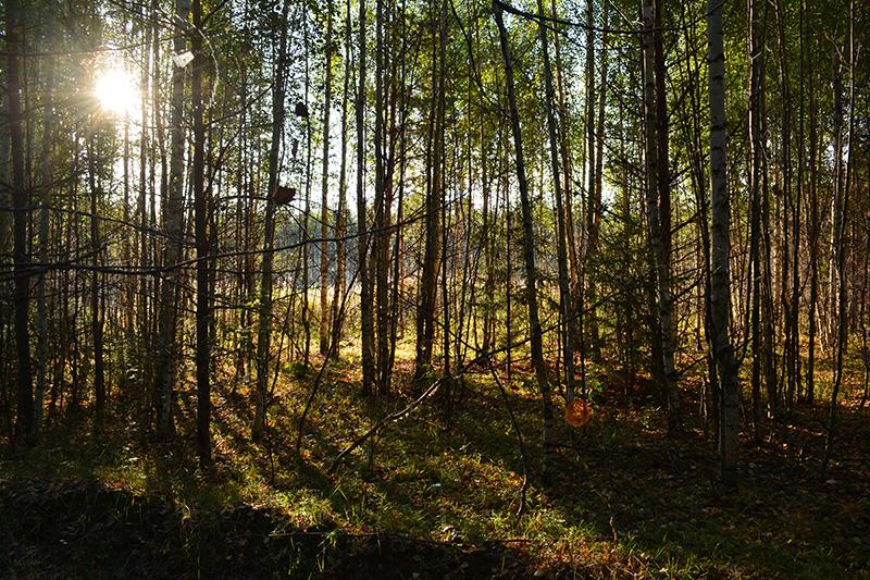 леса 30.jpg