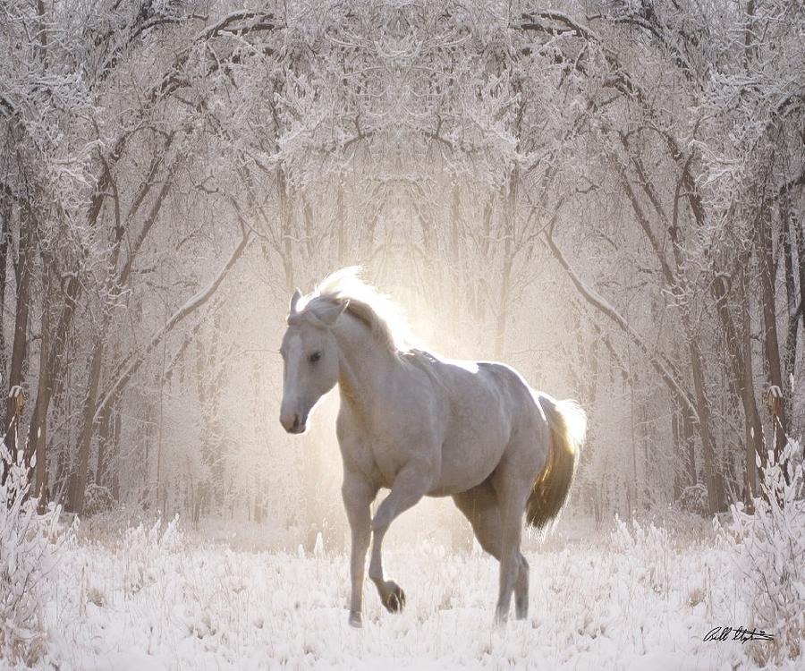 snow-white-bill-stephens.jpg