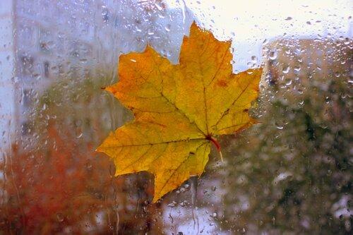 В окне - подруга Осень!