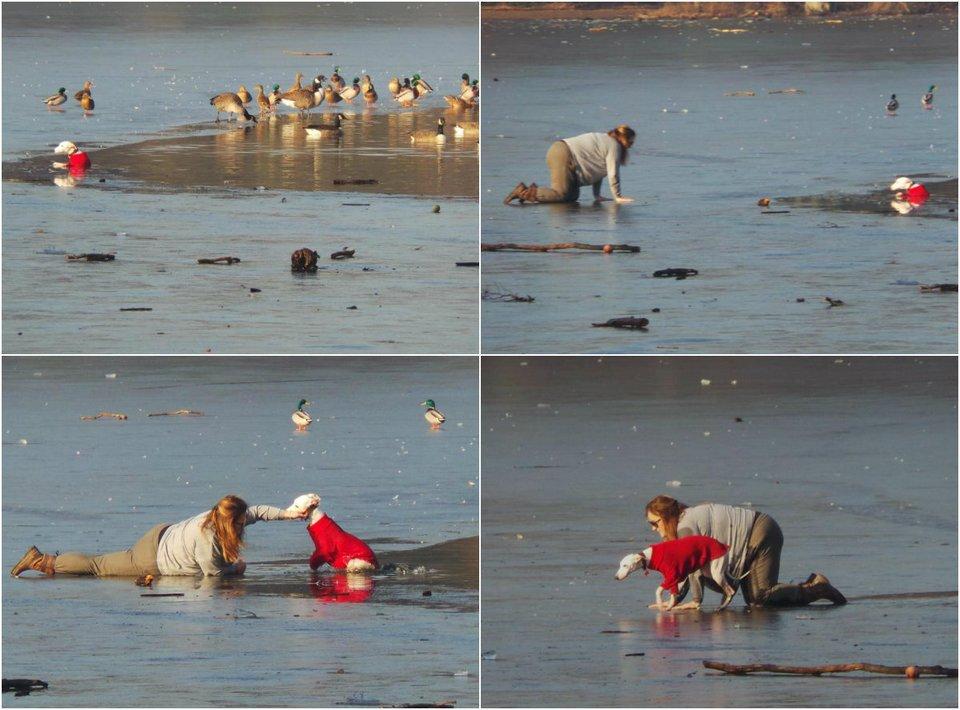 Отважная хозяйка спасает пёсика, провалившегося под лёд