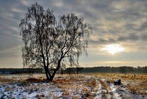 Утро,дерево,дорога,кресло...