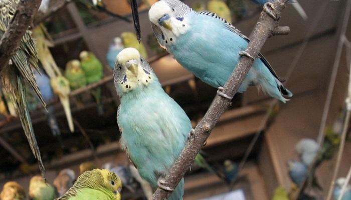 Палеонтологи отыскали вСибири неизвестный вид попугаев