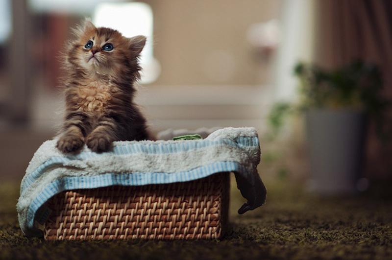 kitty_12.jpg