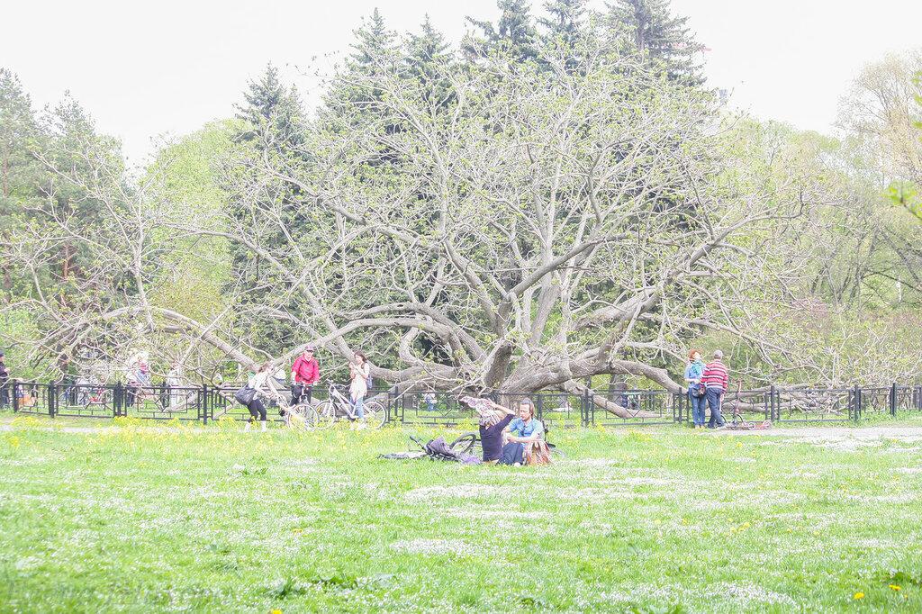 Главный ботанический сад-36.jpg