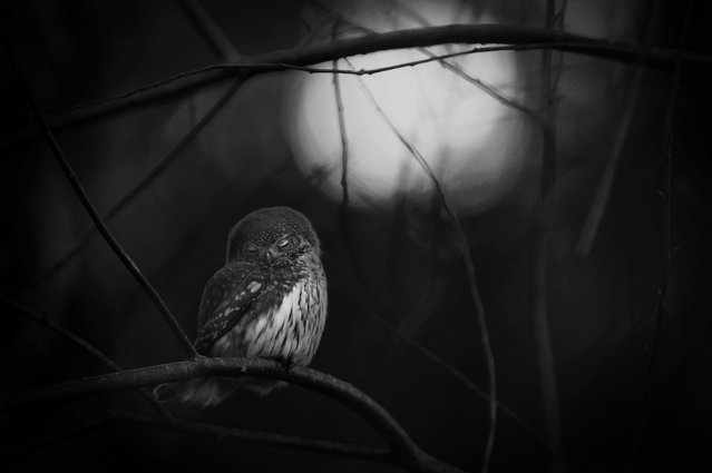 """Requiem for an owl"". Mats Andersson, Sweden Winner, Black and white category. Every day in early sp"