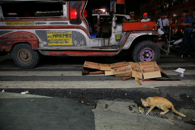 A cat walks in front of the body of a man killed by unknown gunmen in Manila, Philippines early Octo