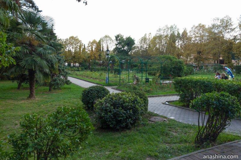 Розарий, парк Ривьера, Сочи