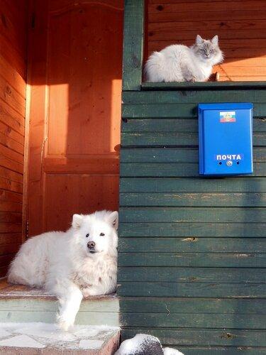 Ждут почтальона Печкина