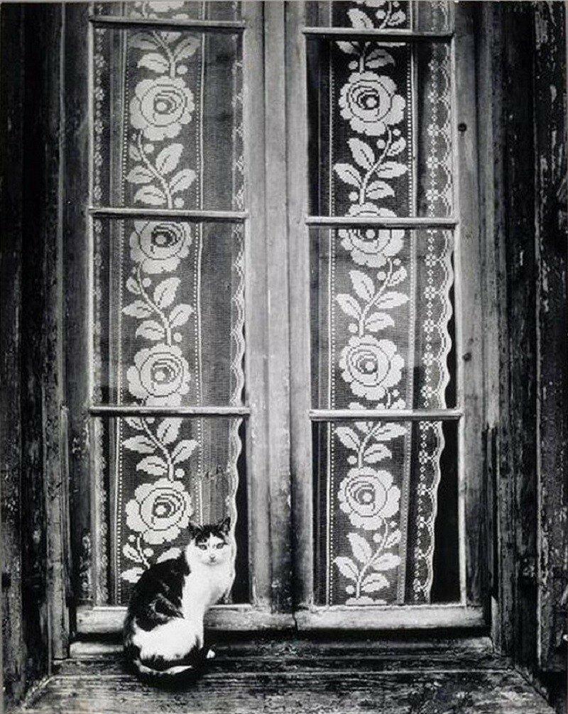 1937. Кошка и кружевные занавески