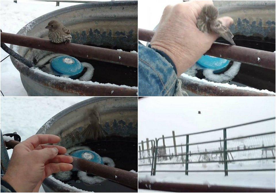 Добрый человек спас птичку, примерзшую к трубе