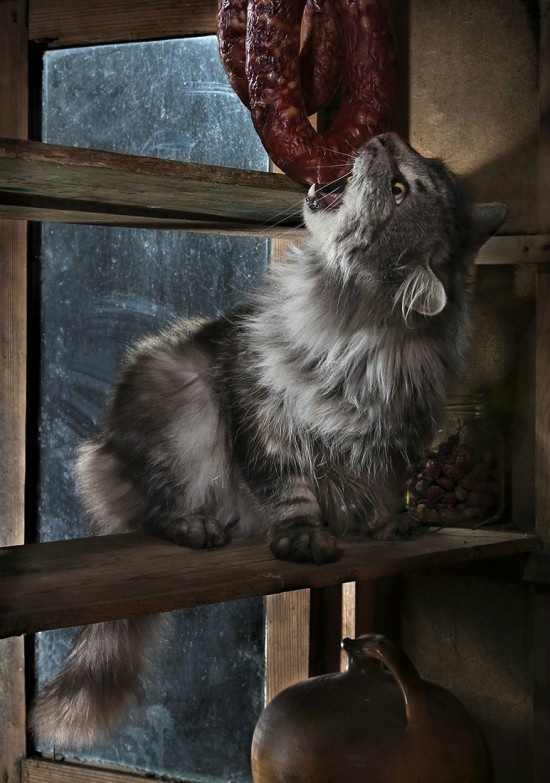 кошки-кошки-света павловская.jpg