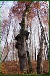 http://img-fotki.yandex.ru/get/174352/15842935.403/0_f0b04_b007fc03_orig.jpg