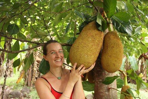 Jackfruit big - ������� ���� ���������
