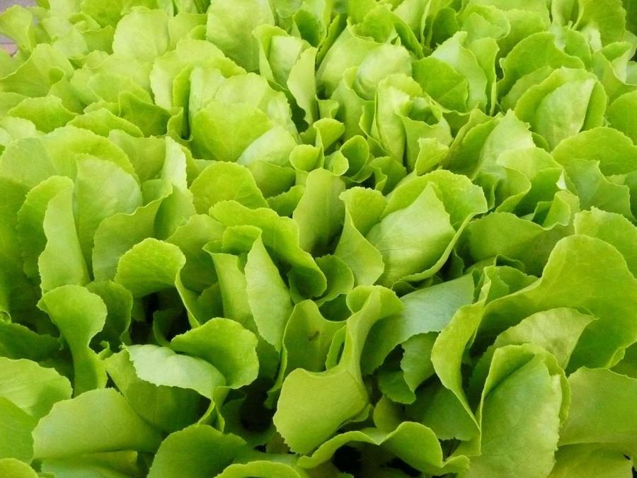4. Салат Любителям салата следует знать, что, по мнению Всемирной организации здравоохранения, в ово
