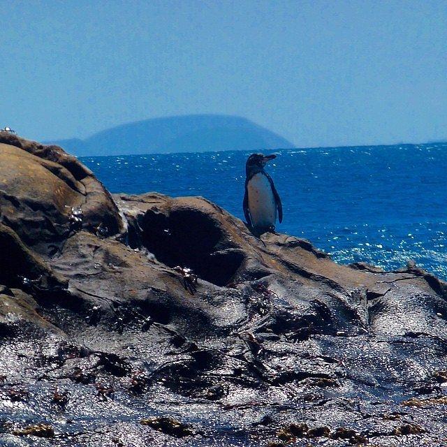 Галапагосские острова, Эквадор. Если вы предпочитаете общение с дикой природой потягиванию освежающи