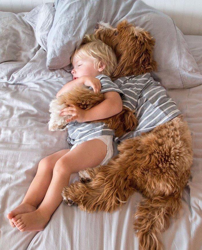 3-летний усыновлённый мальчик и пёс из приюта – лучшие друзья (9 фото)