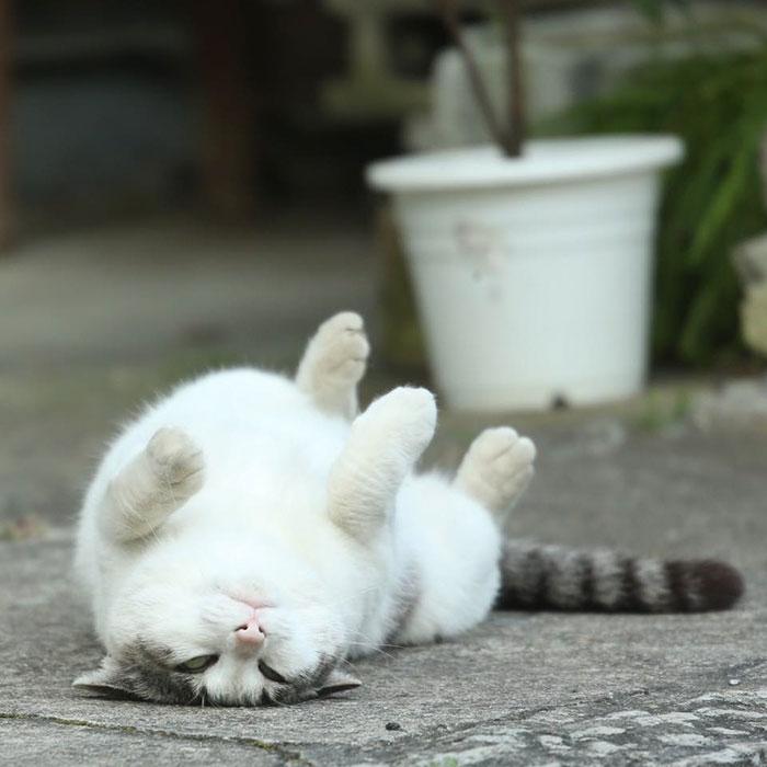 Именно там он документирует жизнь бездомных кошек, которые дерутся, спят и даже позируют перед к