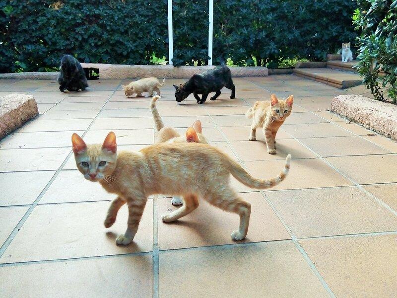 Боевые коты Майорки