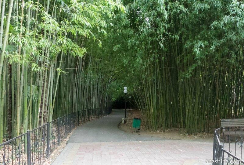 Бамбуковая роща, Сочинский дендрарий