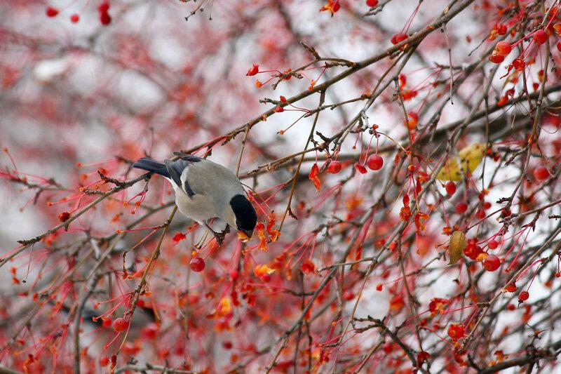 """Winter cherry"""""""