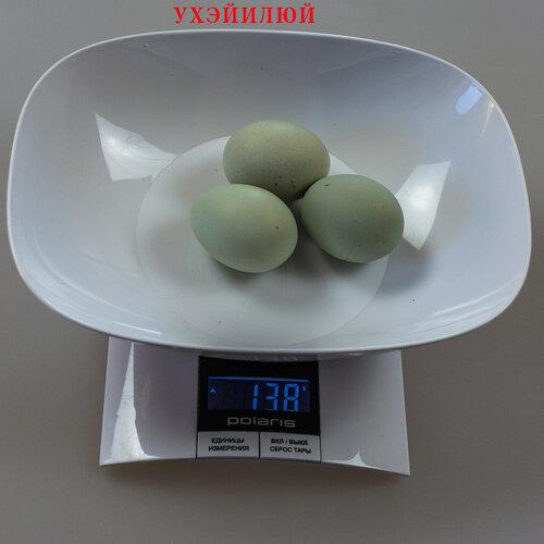 Dongxiang Lvkedanji 东乡绿壳蛋鸡 (Ухэйилюй) 0_19152f_2273aaec_L