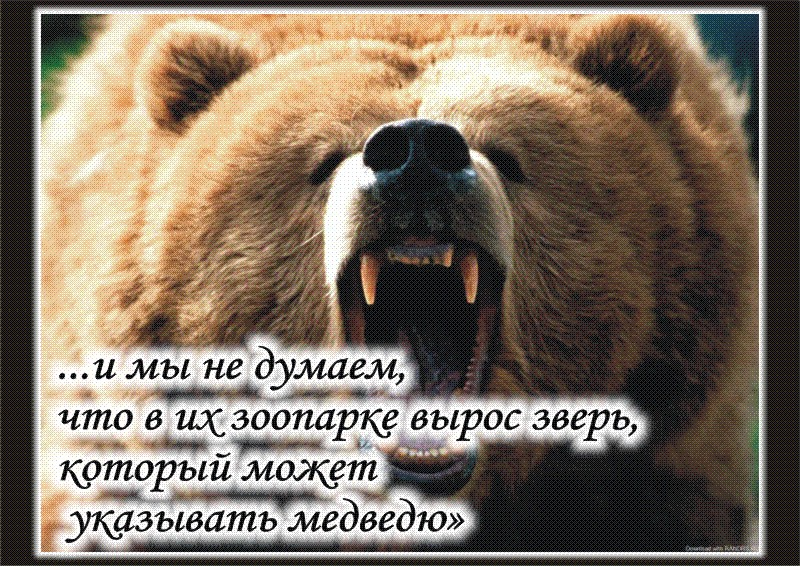 О медведях