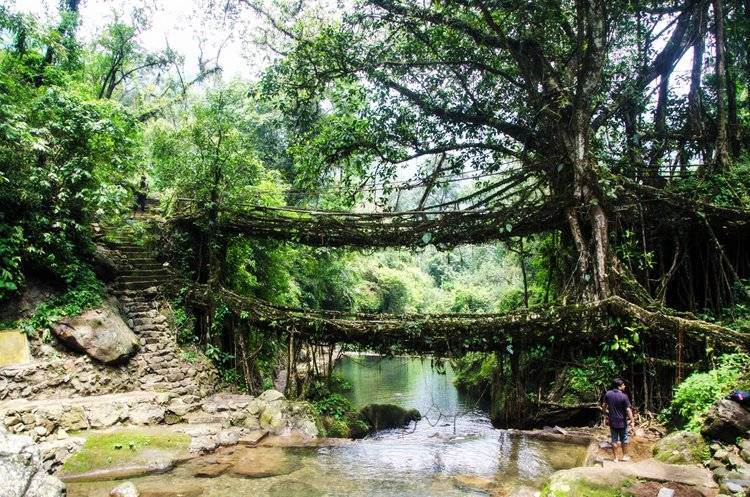 3. Живые мосты Мегалая Живые мосты Черапунджи в Мегалая можно назвать настоящим чудом природы. Они п