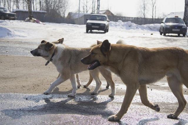 ВМахачкале стая собак атаковала ребенка: девочку спасти неудалось