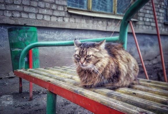 Практически 2 тысячи нижегородцев пострадали отукусов животных затри месяца