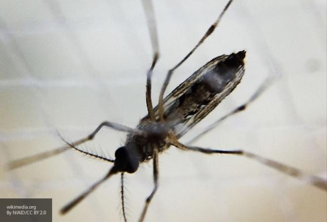 ВОЗ сказала о 3-х случаях заражения вирусом Зика вИндии