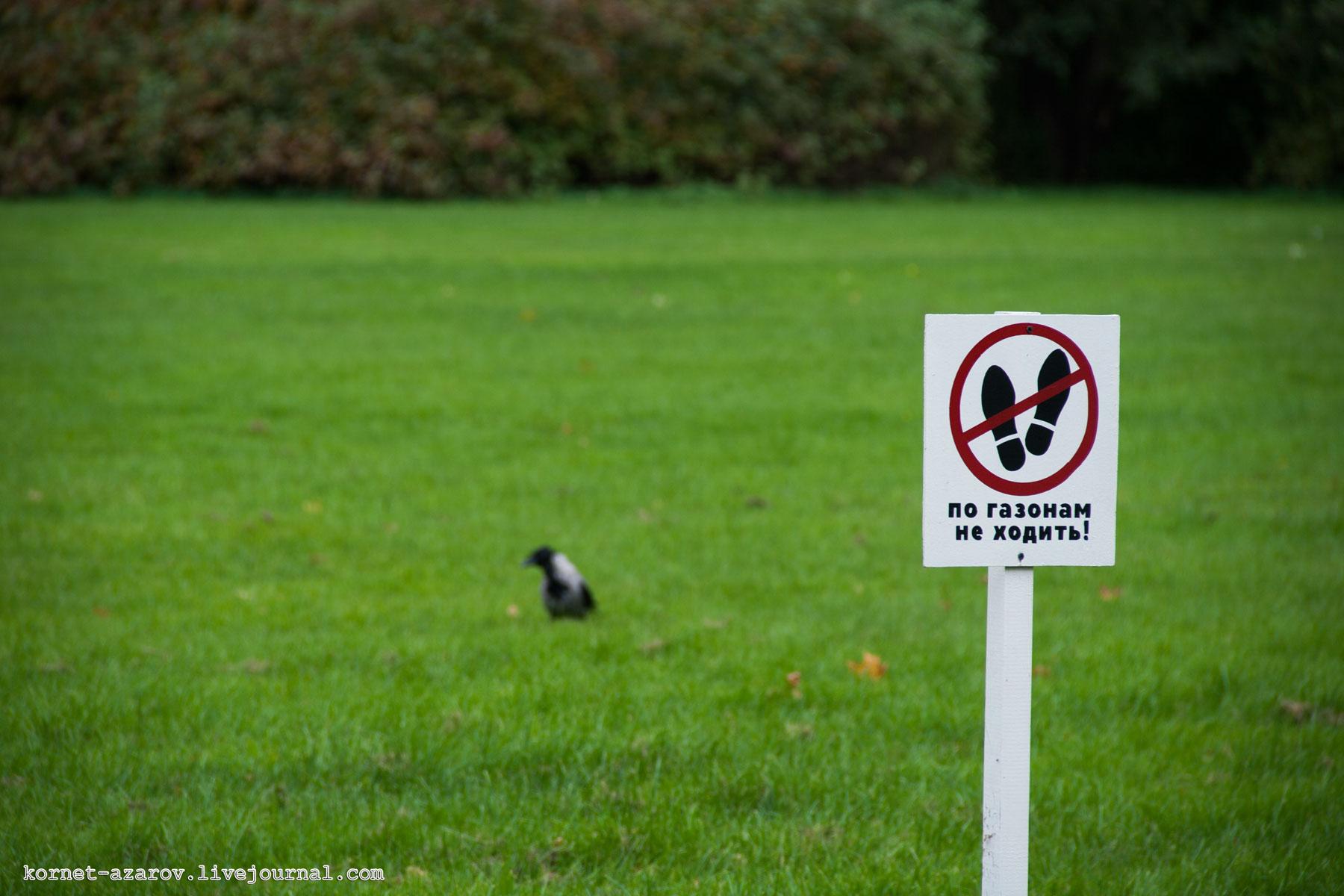 Знак не ходить по газону где можно встретить