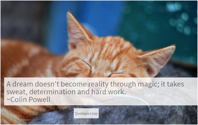 A dream doesn't become reality through magic; it takes sweat, determination and hard work. ~Colin Powell