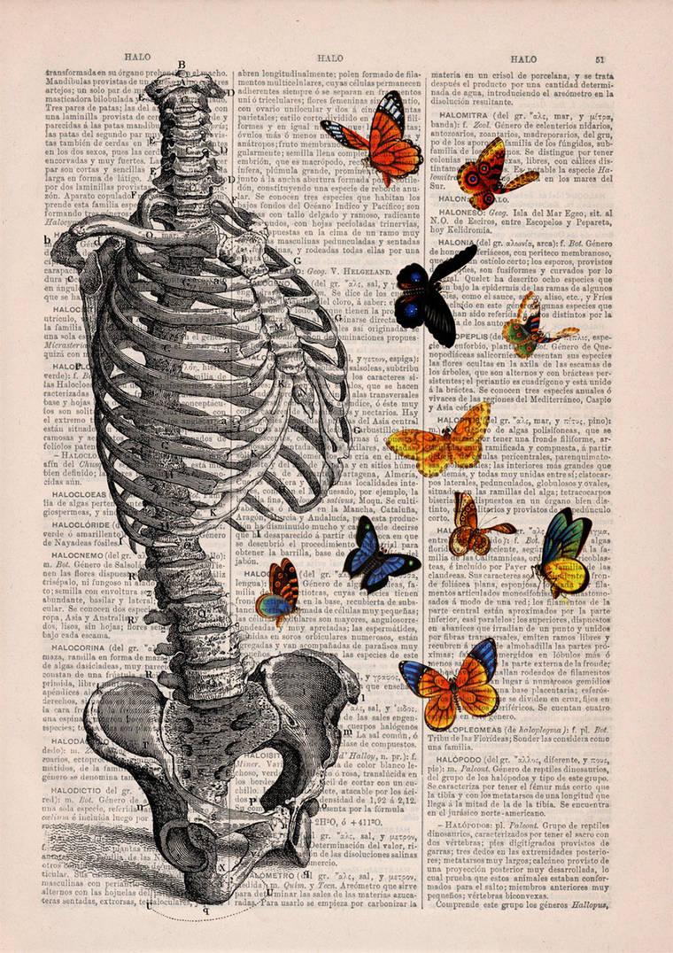 Floral Anatomy - Des illustrations poetiques sur de vieilles pages de livres
