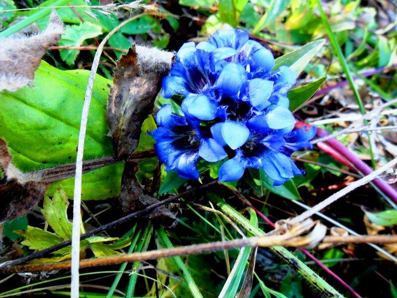 Цветы, у тропы, в Адыгее ... SAM_3360.JPG