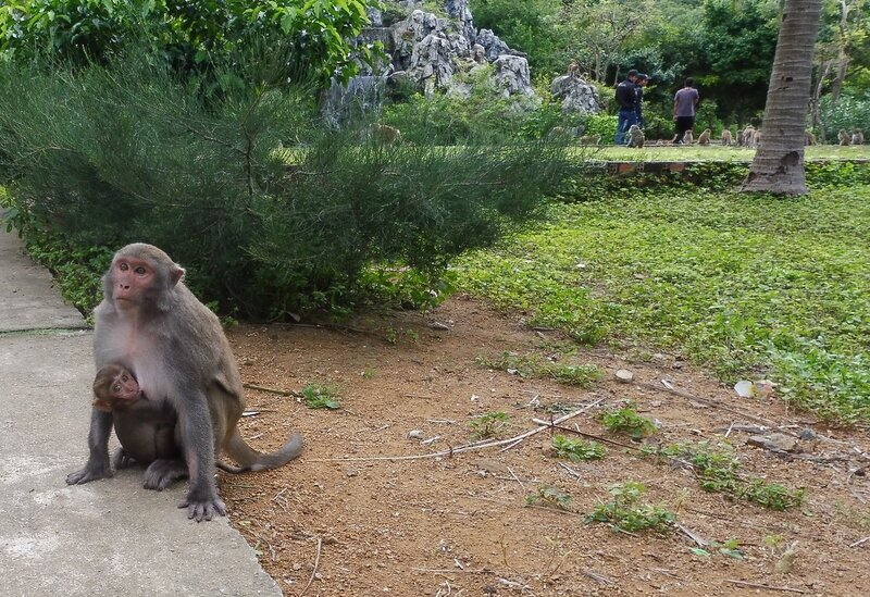 На острове обезьян