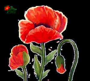 Poppies Graphics