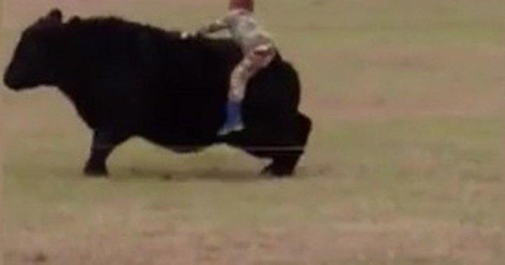 Ребенок запрыгнул на быка из-за спора с отцом